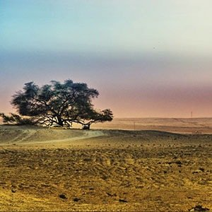 Tree of Life-Interesting Facts About Deserts