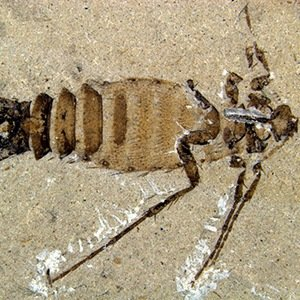 Fleas-Interesting Facts About Dinosaurs