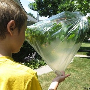 Plastic Bag to tree-Interesting Facts About Plastic