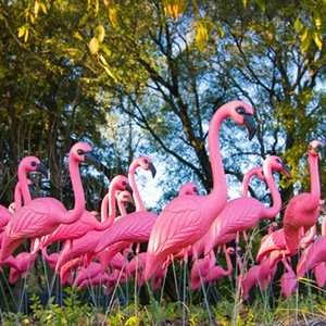 Plastic Flamingoes-Interesting Facts About Plastic