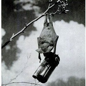 Bat bombs-Interesting Facts About Bombs and Explosions