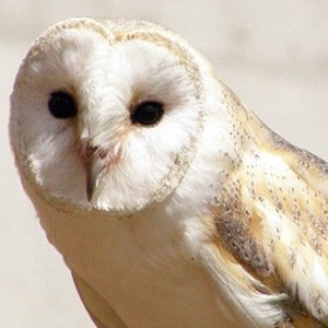 Harry Potter Owls- Amazing Facts About Birds