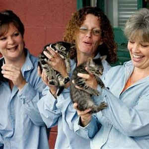 Indiana State Prison cat program-Interesting Facts About Prisons