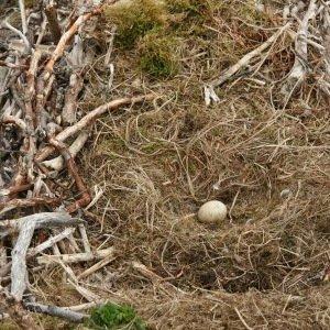 Largest Nest-Unbelievable Facts About Birds