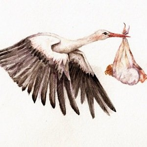 Stork- Amazing Facts About Birds