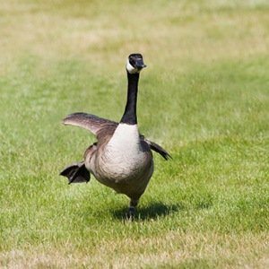 Wild goose chases- Interesting Facts About FBI