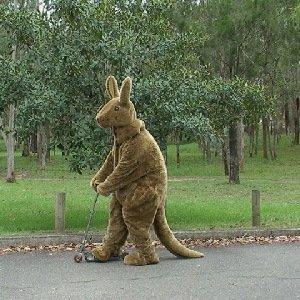 Billy Hunt Kangaroo