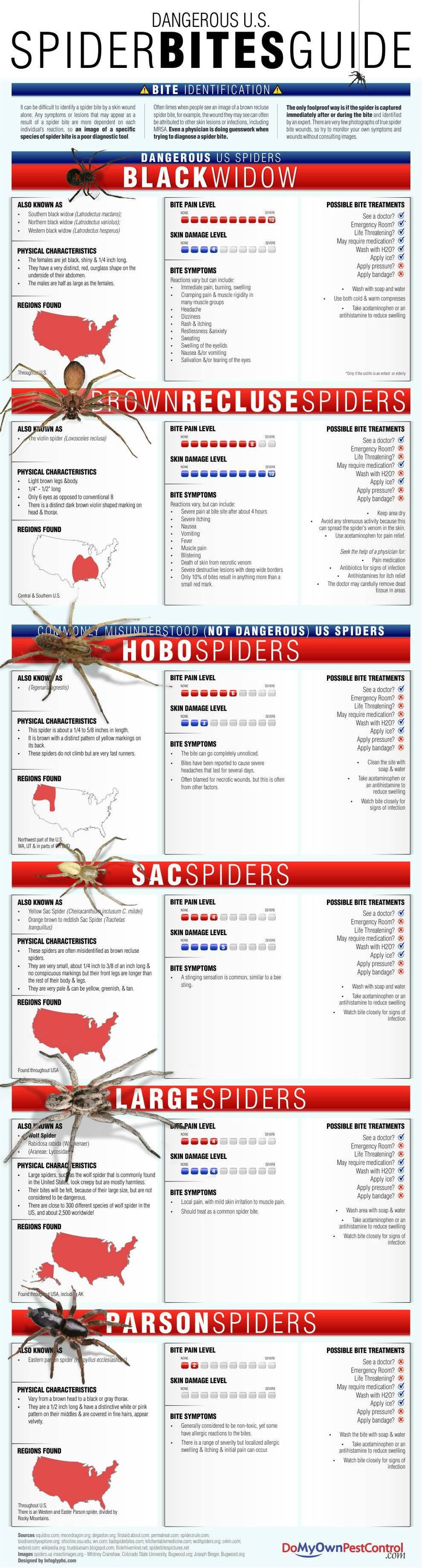 16 Spiderbites Guide (Infographic)