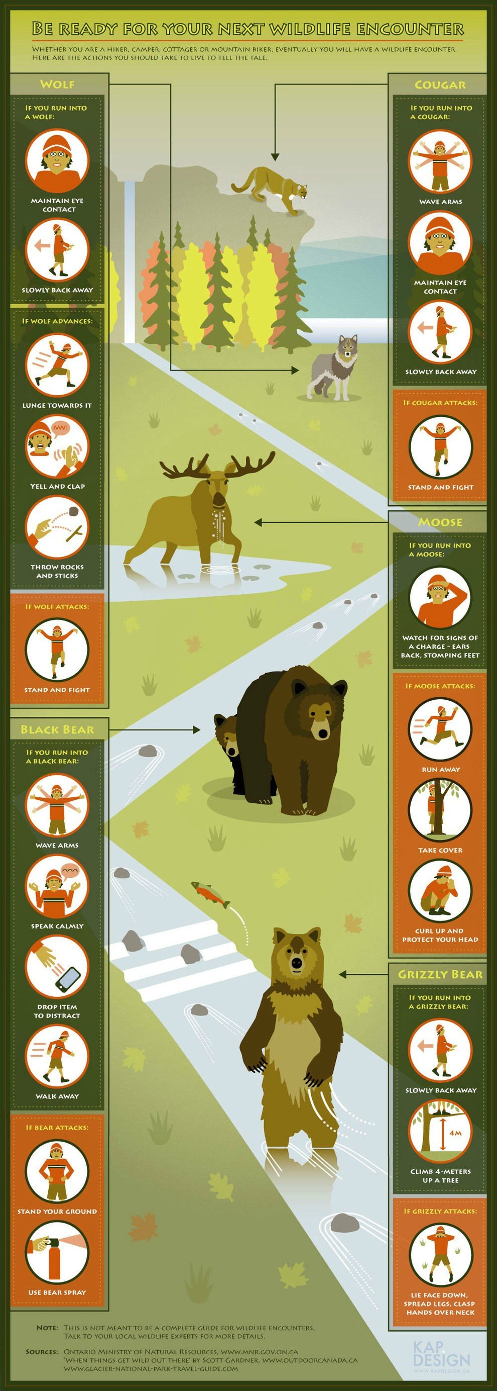 19 Be ready for your next wildlife encounter (Infographic)