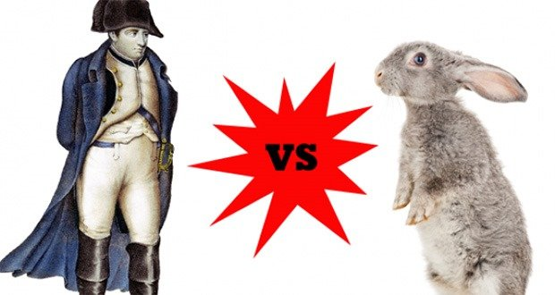 Napoleon vs Rabbits
