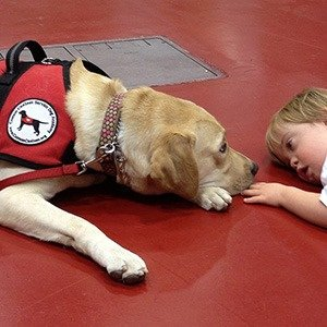 the different types of service dogs There are different types of service dogs: guide dogs for the blind, hearing dogs, mobility dogs, medical alert dogs service dogs, therapy dogs, and emotional support animals - important differences familypet by familypet proper fap familypet_belowtitle.