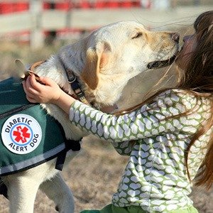 Diabetic Detection Dogs