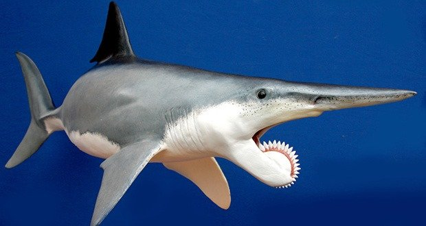 04 Helicoprion