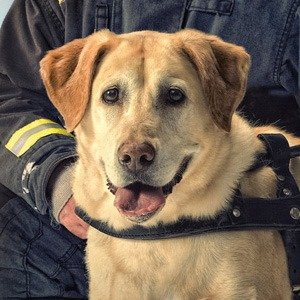 Guide dog 9-11