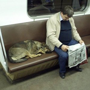 Moscow Subway dogs