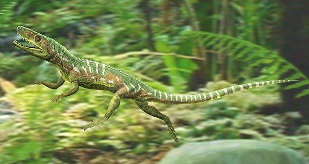 09 Euparkeria (Archosaur)
