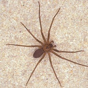 25 Kickass and Interesting Facts About Spiders ... - photo#3